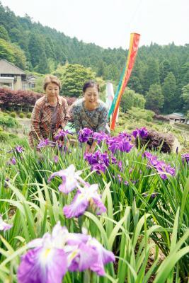 あやめ祭り 牧山零羊崎神社一般開苑 梅雨の晴れ間に鮮やか色彩 7月6日まで